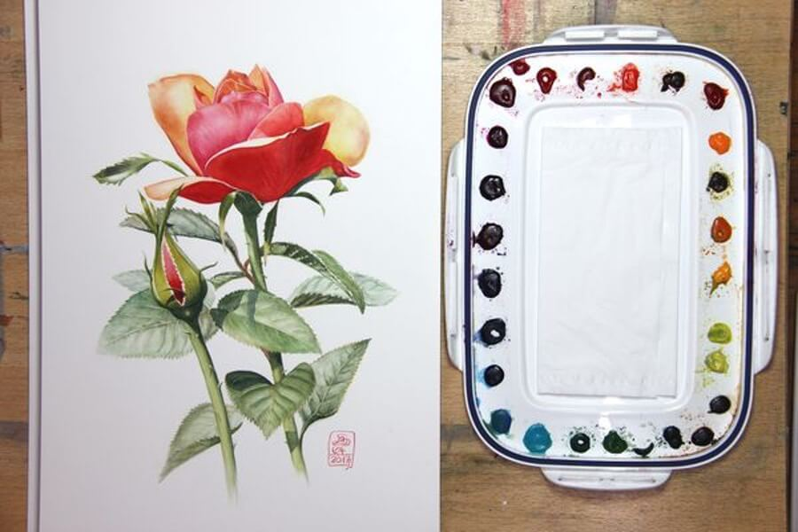 Botanical Painting By Susanne Absolon
