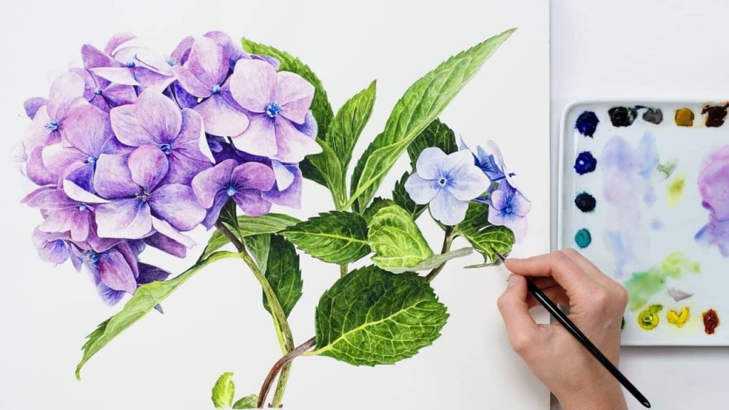Hydrangea Flowers In Watercolour With Anna Mason