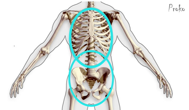 The Bean Ribcage And Hip Ovals