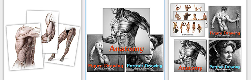 Courses Bundles Of Proko Features Anatomy Course