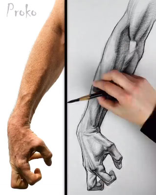 Demonstrating Drawing The Forearm Anatomy