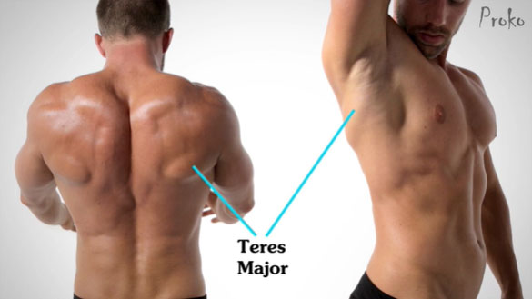 One Muscle Different Location Different Form